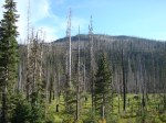 Strangely beautiful, this is what's left after a wildfire on Santiam Pass, OR, Hwy. 20