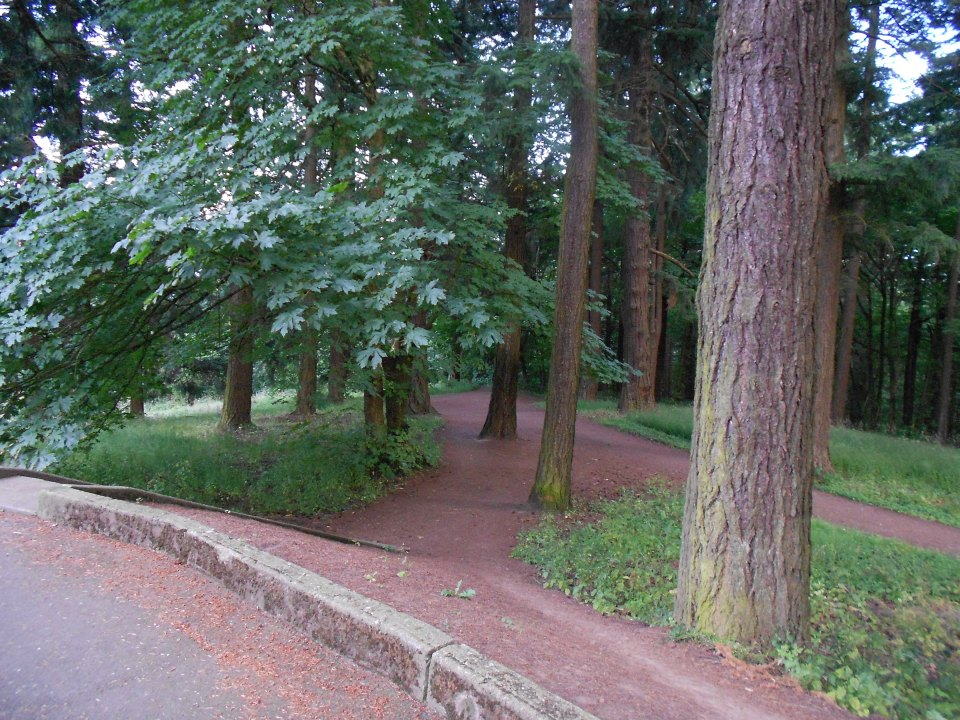 The trails on Mt. Tabor Park are so pretty.