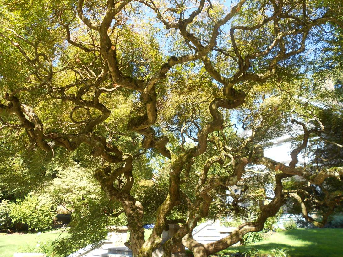 Corkscrew Tree Ending The Bleak Streak